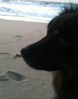 Alltags-Hund Bootsmann