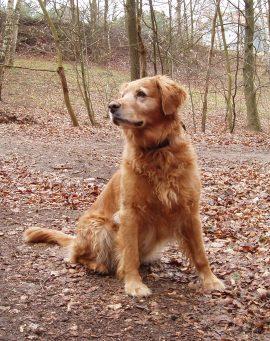 Alltags-Hund Diva