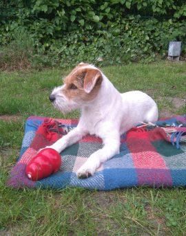 Alltags-Hund Sally