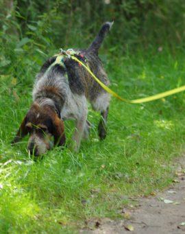 Alltags-Hund Schrubbie