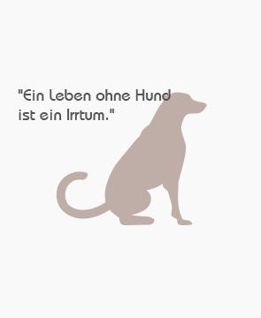 """""""Ein Leben ohne Hund ist ein Irrtum."""""""